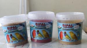 comida para canarios recien nacidos