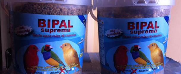 Alimentando-pasta-de-cría-canarios
