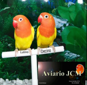 Aviario JCM copia