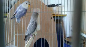 Aviario Maypi 1