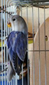 Aviario Maypi 2