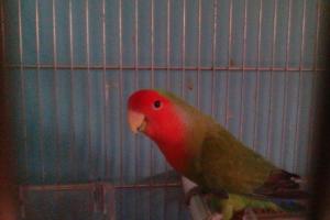 Aviario Maypi