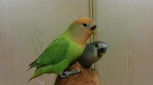 Aviario Maypi 8