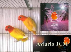JCM aviario 2