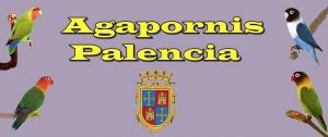 agapornis-palencia