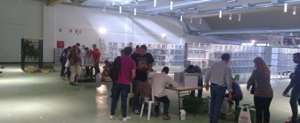 Consejos-Concurso-agapornis