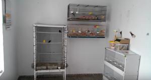 aviario-canarios-ordenado