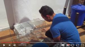limpieza-jaula-aviario