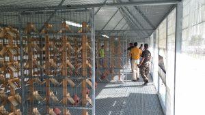 Instalaciones-Sevilla-Pigeons-Race