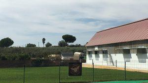 Sevilla-Pigeons-Race