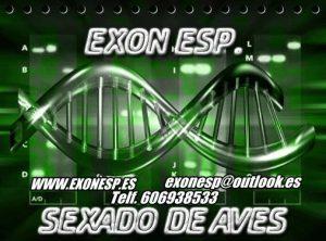ExonESP