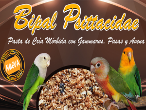 bipal-psittacidae-agapornis