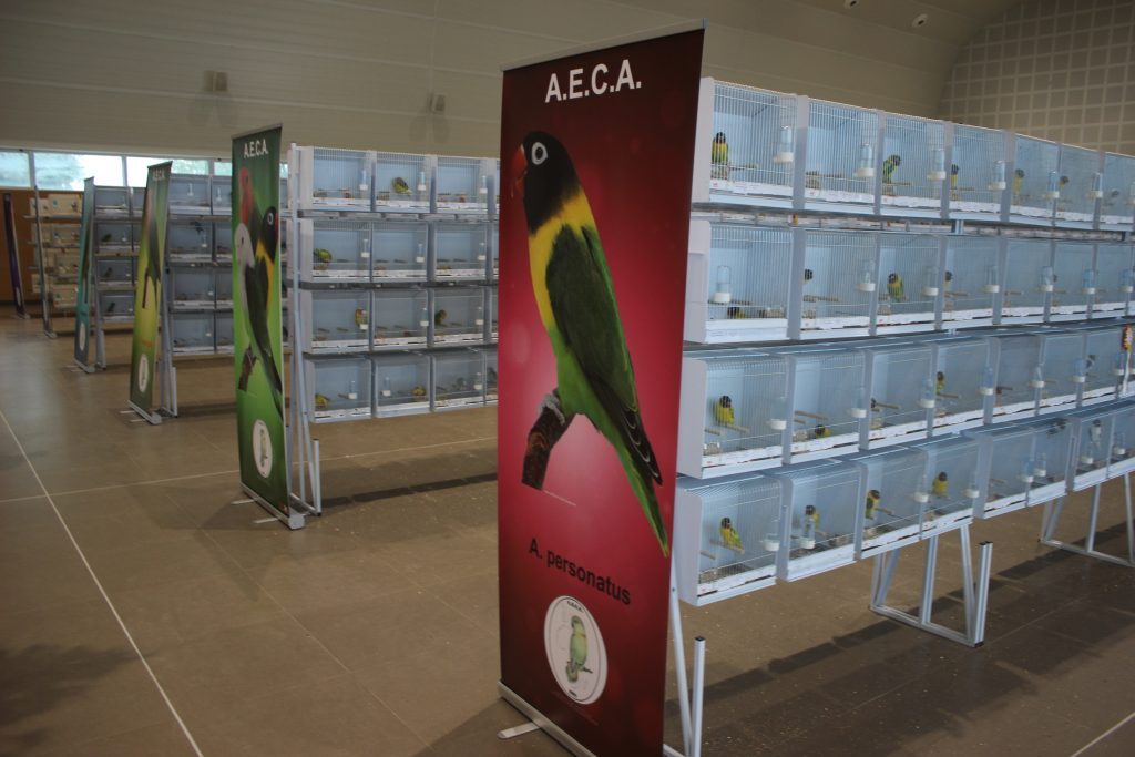 aeca-premios-agapornis