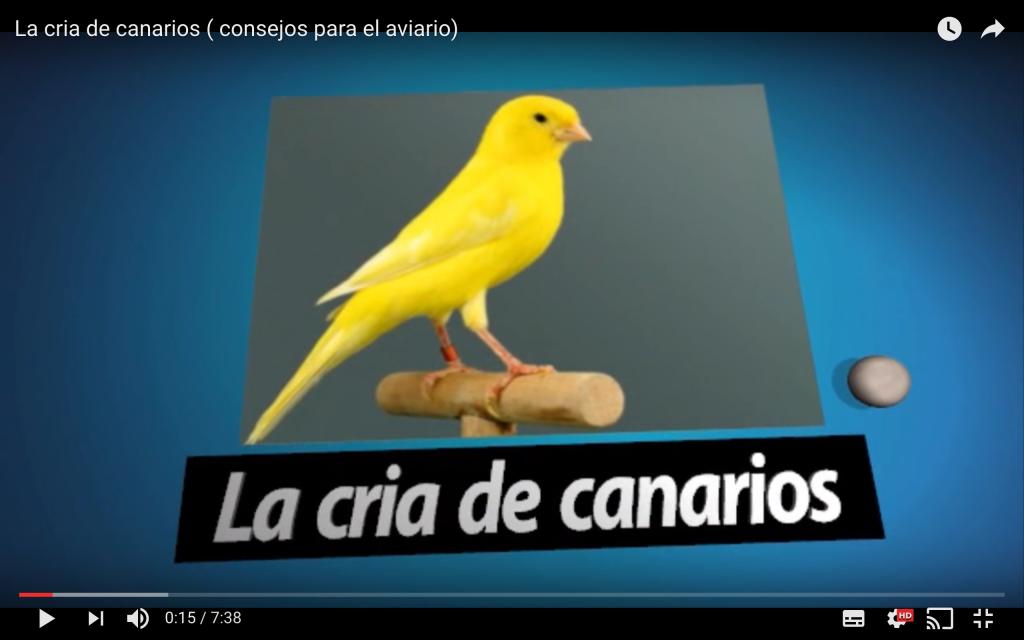 consejo-aviario-canarios