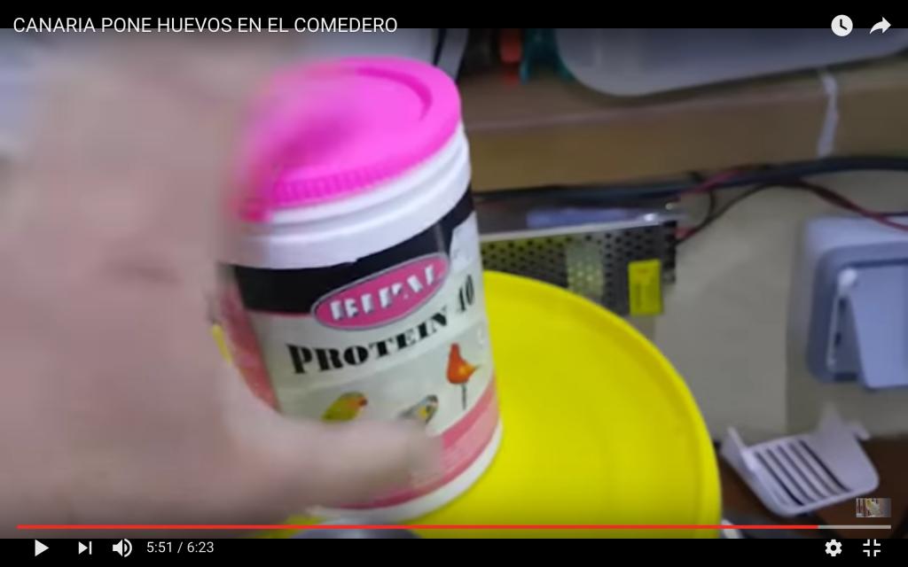 huevos-cria-canarios
