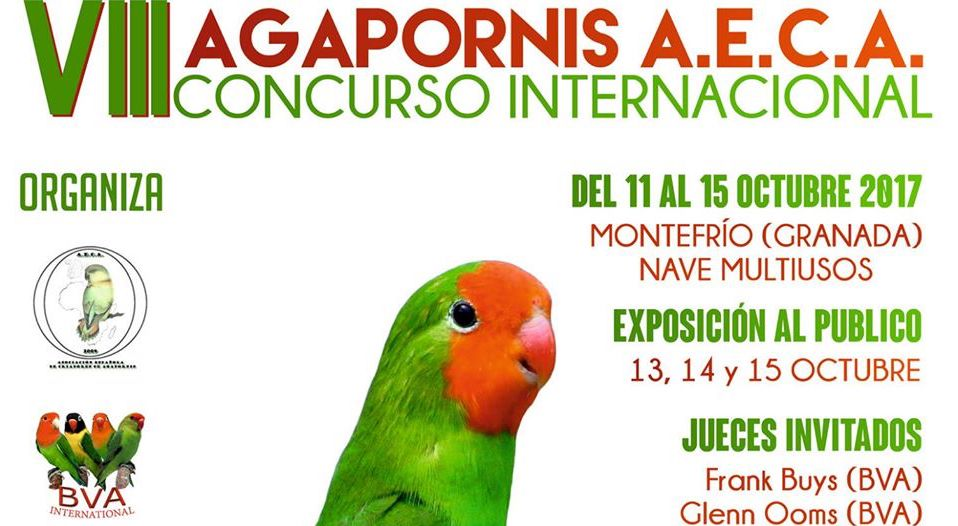 Concurso-Agapornis-AECA