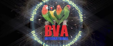 BVA-MASTERS-2017